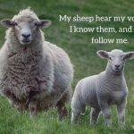 Sheep Spotting
