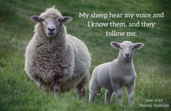 Sheep Spotting - Sermo Humilis