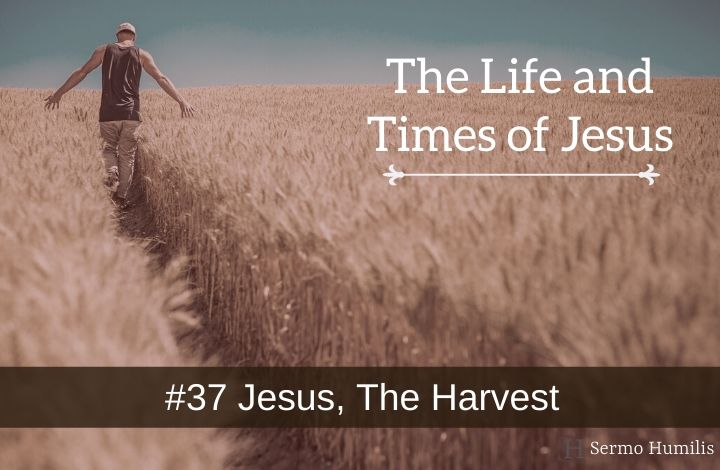 #37 Jesus, The Harvest - The Life and Times of Jesus